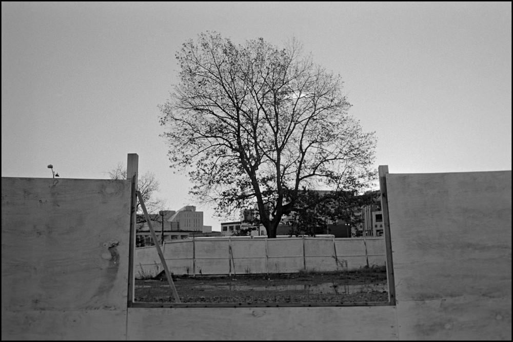Tree, Abandoned Lot