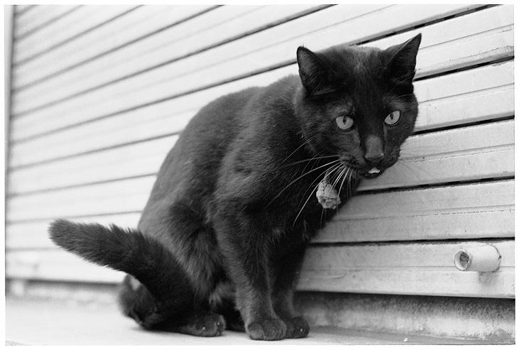 Black Cat of Brussels, Hexar RF, 50 Hex, Delta 400, Tmax Dev