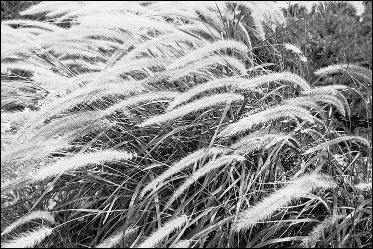 Grass, Hexar RF, ZM Biogon 35, Delta 400, Tmax Dev