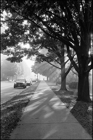 Morning Run, Hexar RF, 50 Hex, Delta 100 @ 50, Tmax Dev
